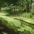 Photos: 湧き水と水草