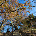 Photos: 山頂への道
