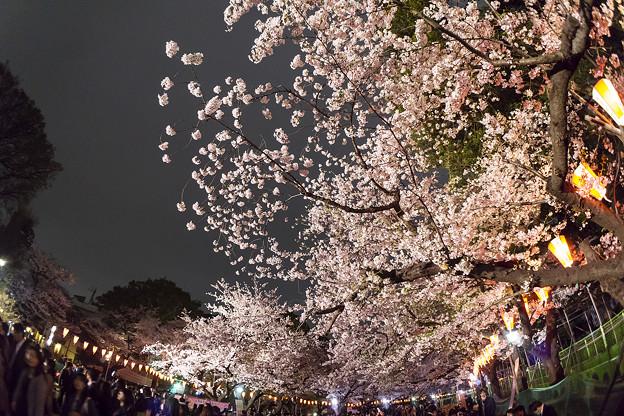夜桜と人の賑わい