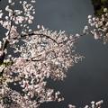 夜空にかかる桜橋