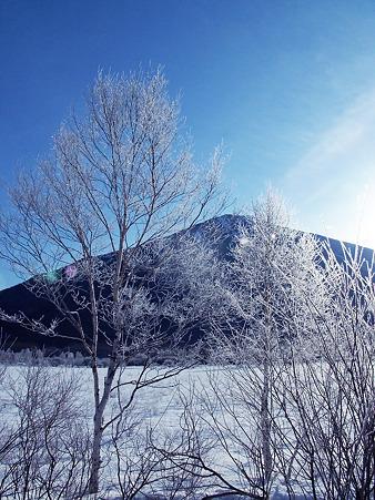 凍てつく樹木と、男体山