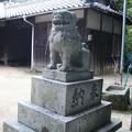 Photos: 小さい豆の島の狛犬「阿」