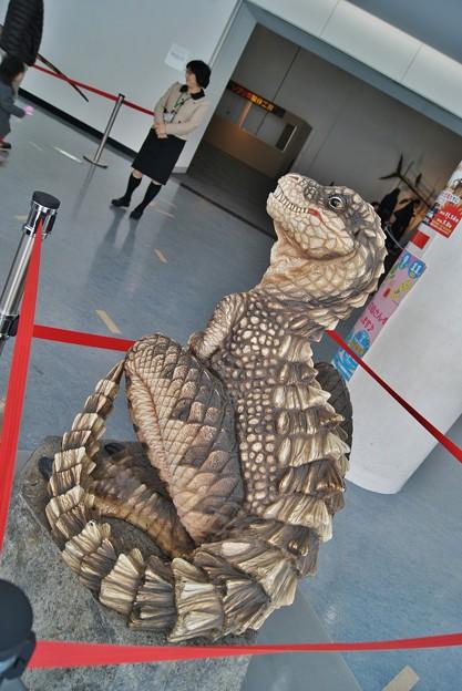 福井県立恐竜博物館.ティラノザウルスの子供