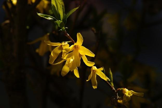 写真: 庭の花木