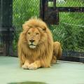 Photos: ホワイトライオン