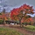 井川湖畔遊歩道 紅葉 (7)