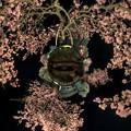 熱海桜ライトアップ Little Planet HDR