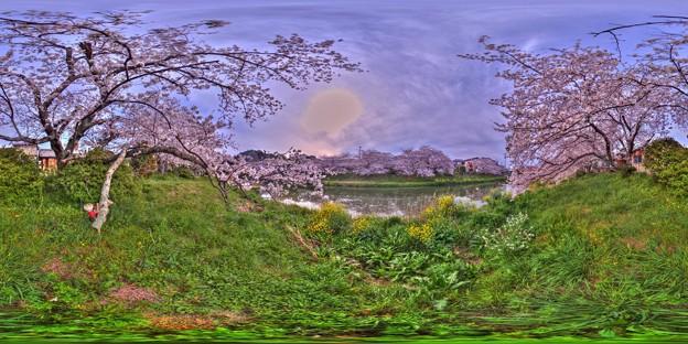 牧之原市 勝間田川の桜 360度パノラマ写真(2) HDR