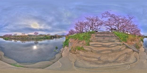 牧之原市 勝間田川の桜 360度パノラマ写真(3) HDR