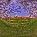 牧之原市 勝間田川の桜 360度パノラマ写真(6) HDR