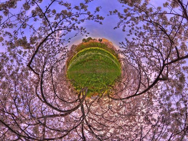 牧之原市 勝間田川の桜 Little Planet(3) HDR