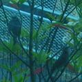 写真: ヒヨドリのペアー