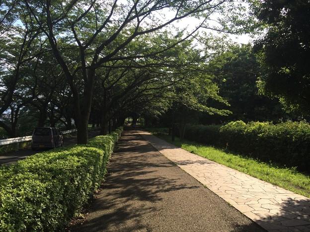 140711 尾根緑道