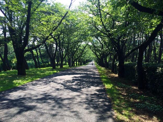 140715 辰巳の森緑道公園