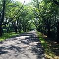 写真: 140715 辰巳の森緑道公園