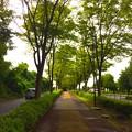 写真: 140907 尾根緑道