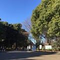 写真: 160109 代々木公園