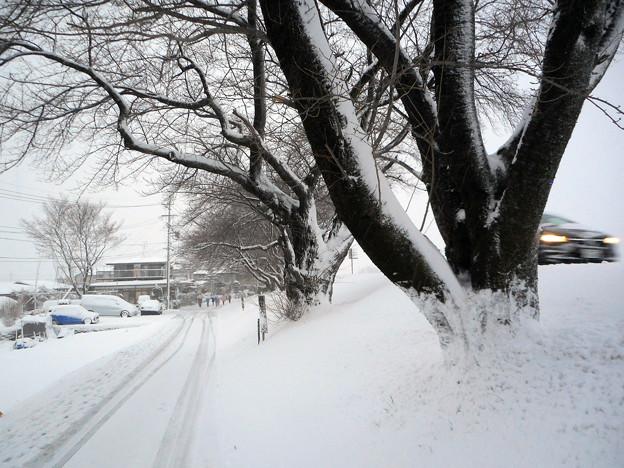 冬の散歩道松本2016.1-1