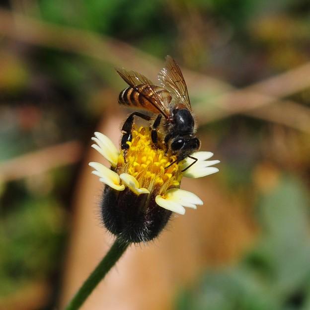 Photos: 秋天的蜂2