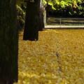 Photos: 黄色い地面