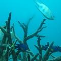 Photos: 海底