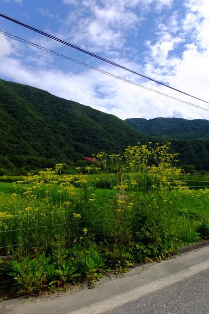 この地で可憐に咲くお花