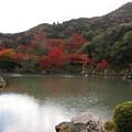 天龍寺を彩る紅葉