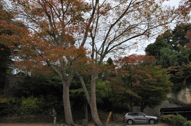 写真00418  今さら瑞巌寺でもないし、近くの路地を歩いてみましたむ