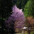 Photos: 写真00382 中綱湖