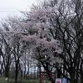 Photos: 写真00699 網張への県道を走っていて