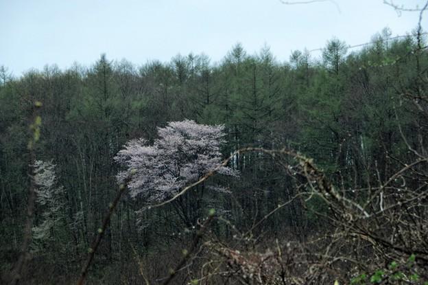 Photos: 写真00707 開墾中の林の中に
