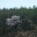 写真00707 開墾中の林の中に