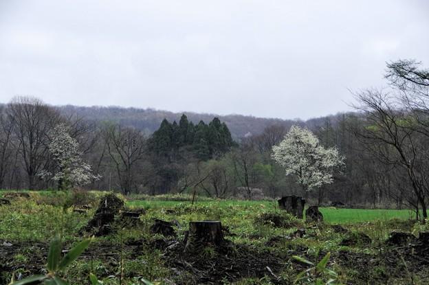 Photos: 写真00721 荒れた牧草地に