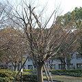 写真: DSC_0527.JPG