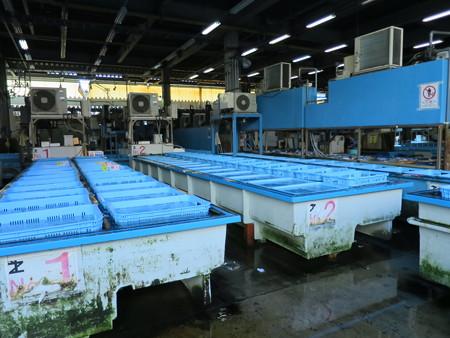 築地市場 活魚コーナー