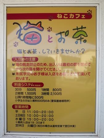 ねこカフェ 猫とお茶 インフォメーション