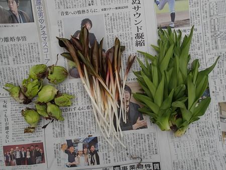 2016/03/18の収穫