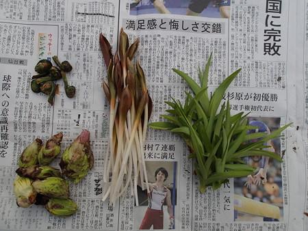 2016/03/22の収穫