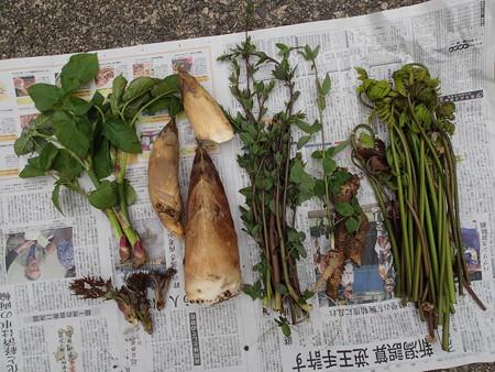 2016/04/10の収穫