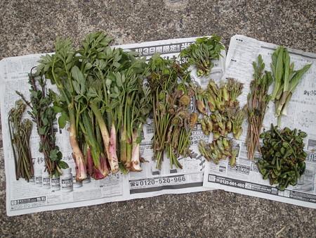 2016/04/18の収穫