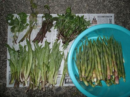 2016/05/09の収穫