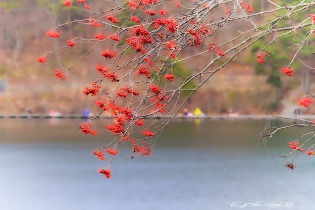 初冬の聖湖_5_rs-1