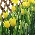 写真: 早春の花ー2