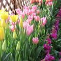 写真: 早春の花ー4