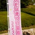 Photos: コスモスの丘151017_001