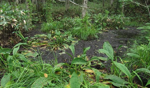 湿原の乾燥化
