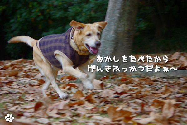 s-myu2009_1129(077)