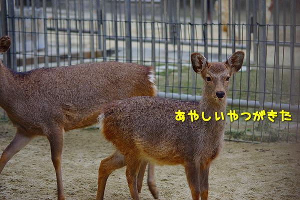 s-myu2009_1129(149)
