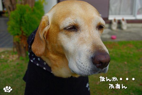s-myu2009_1210(006)