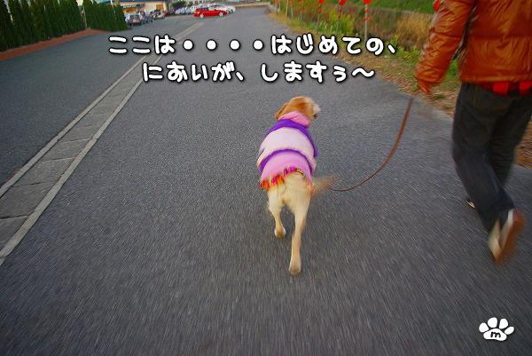 s-myu2009_1220(039)